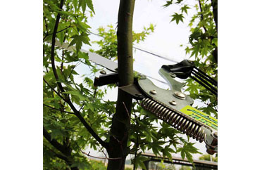 The Importance of Pruning: Protecting Your Plants and Property